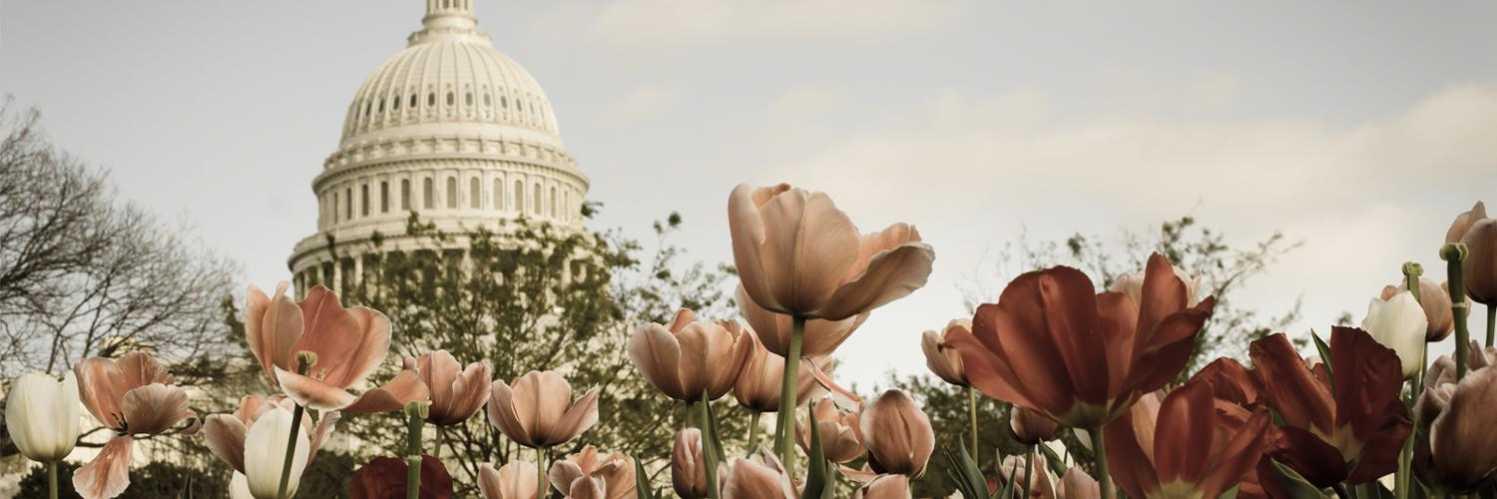 Washington DC hotels