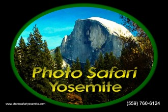 Photo safari yosemite tours