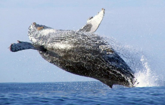 Princess whale watching specials