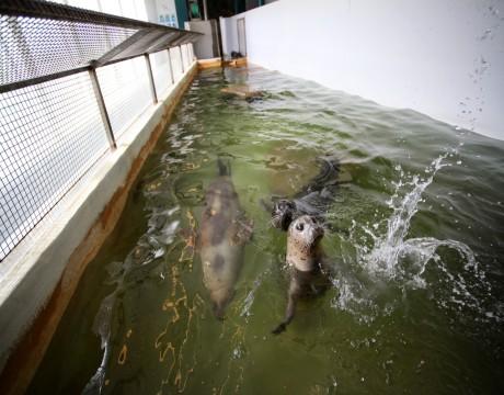 River Inn Hotel in Seaside, Oregon - Seaside Aquarium Seals