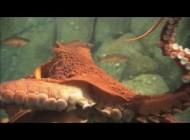Monterey Bay Aquirium